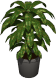 potted_plant1.png